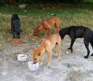 Eddys Dogs
